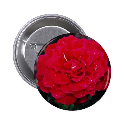 """Flores blancas híbridas de """"señor Lincoln"""" del ros Pin Redondo 5 Cm"""