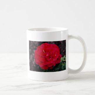 """Flores blancas híbridas de """"señor Lincoln"""" del ros Taza Básica Blanca"""