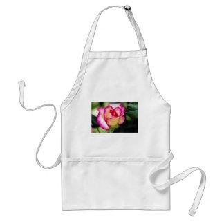 Flores blancas híbridas del rosa de té delantal