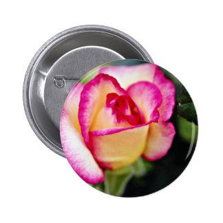 Flores blancas híbridas del rosa de té pins