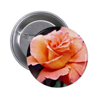 Flores blancas híbridas del rosa de té pin