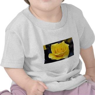 Flores blancas híbridas del rosa de té camisetas