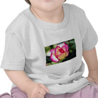 Flores blancas híbridas del rosa de té camiseta