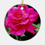 "Flores blancas híbridas paz del rosa"" del rosa de  ornatos"