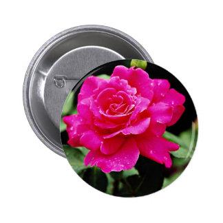 """Flores blancas híbridas paz del rosa"""" del rosa de  pin"""