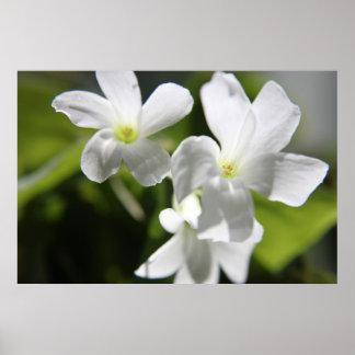 Flores blancas posters