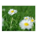 Flores blancas postal