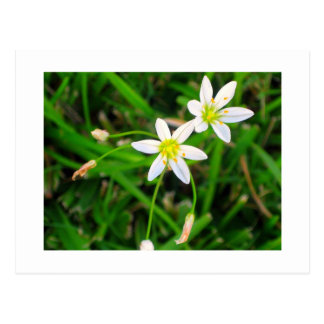 Flores blancas postales