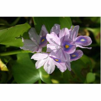 flores blancas púrpuras con los ojos escultura fotografica