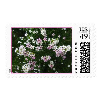Flores blancas rosadas sellos