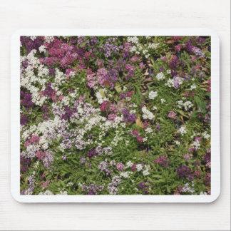 Flores blancas, rosadas y de color de malva mousepad
