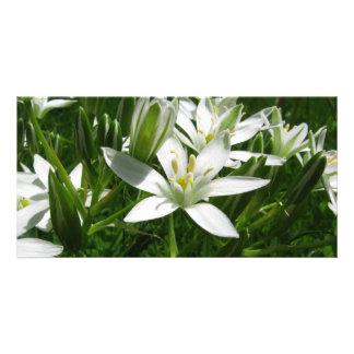 flores blancas tarjeta personal con foto