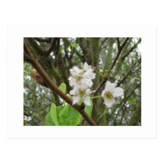 Flores blancas tarjeta postal