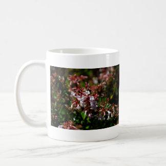 Flores blancas y anaranjadas minúsculas tazas