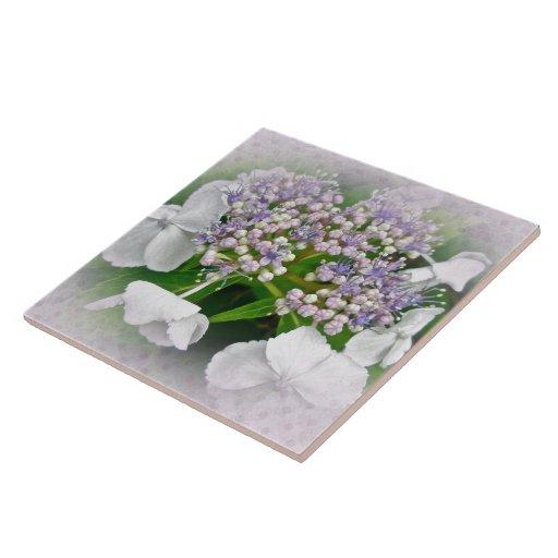 Flores blancas y azules del Hydrangea Azulejo Cuadrado Grande