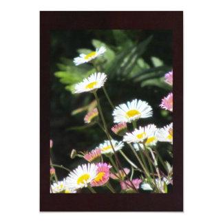 Flores blancas y rosadas de la margarita