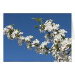 Flores blancos de Crabapple