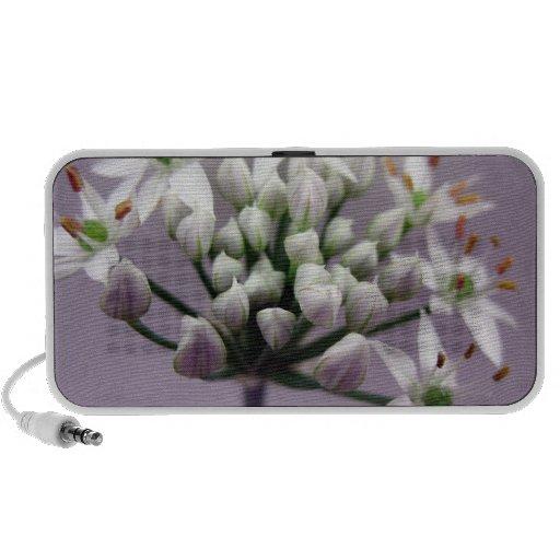 Flores blancos de la cebolleta de ajo en púrpura altavoces de viaje