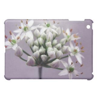 Flores blancos de la cebolleta de ajo en púrpura