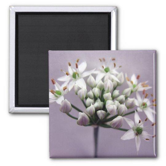 Flores blancos de la cebolleta de ajo en púrpura imán cuadrado