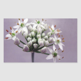 Flores blancos de la cebolleta de ajo en púrpura rectangular pegatina