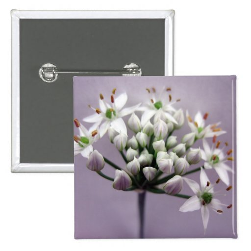 Flores blancos de la cebolleta de ajo en púrpura pin