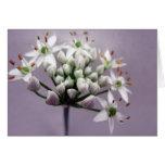 Flores blancos de la cebolleta de ajo en púrpura felicitación