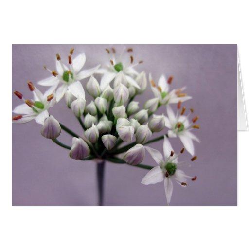 Flores blancos de la cebolleta de ajo en púrpura tarjeta de felicitación