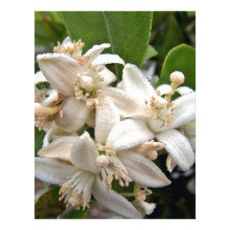 """Flores blancos de la fruta cítrica cubiertos en ro folleto 8.5"""" x 11"""""""