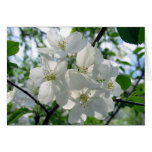 Flores blancos felicitacion