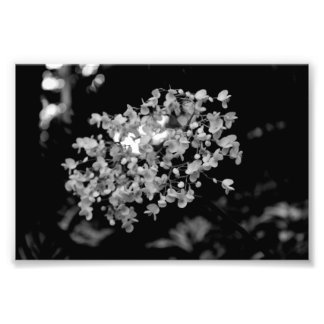 Flores blancos y negros cojinete