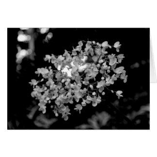 Flores blancos y negros tarjeta