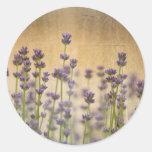 Flores bonitas de la lavanda etiquetas redondas