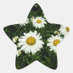 flores bonitas de la margarita blanca colcomanias forma de estrellaes personalizadas
