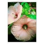 Flores bonitas del melocotón tarjetas