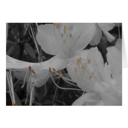 Flores bonitas tarjeta de felicitación