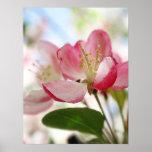 Flores brillantes de Apple de la primavera Poster