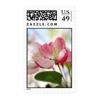 Flores brillantes de Apple de la primavera Sello Postal