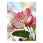 Flores brillantes de Apple de la primavera Tarjeta Postal