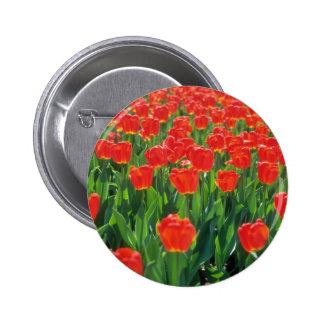 Flores carmesís de los tulipanes pins