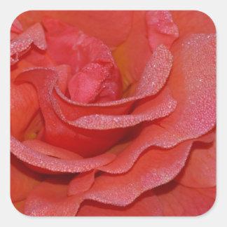 Flores color de rosa coralinos hermosos pegatina cuadrada