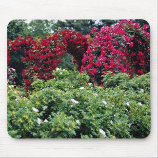 Flores color de rosa de los arcos alfombrillas de ratón
