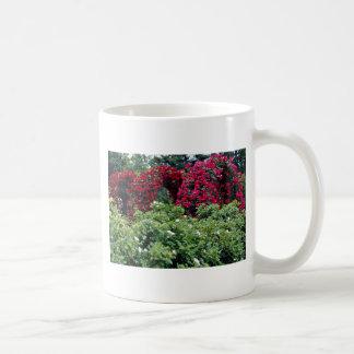 Flores color de rosa de los arcos taza básica blanca