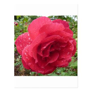 Flores color de rosa que casan alegría de la paz postal