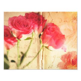 Flores color de rosa rosadas de los rosas del cojinete