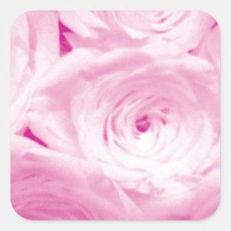 Flores color de rosa rosadas pegatina cuadrada