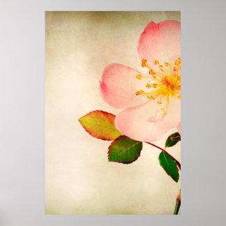 Flores color de rosa rosadas - rosas de la flor en póster