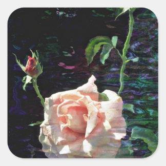 Flores color de rosa y de los brotes rosadas pegatina cuadrada