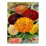Flores coloridas de la dalia del vintage postales