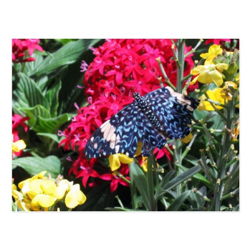 Flores coloridas de la postal azul de la mariposa